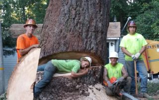 Giant Forestville Tree Removal