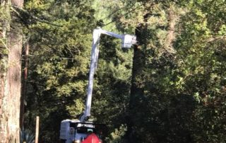 Sonoma County Ranger Station Tree Clearing