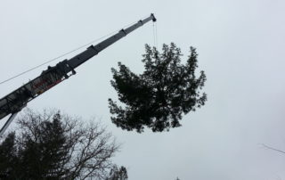 Alexander Valley Tree Removal with Crane